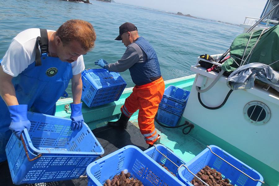 ほっき貝・ウニ資源増殖事業
